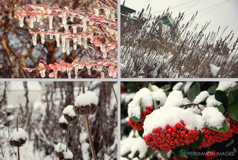 Images of icicles, snow on grasses, seed pods, and snowy berries by Seattle photographer Kat Speyer