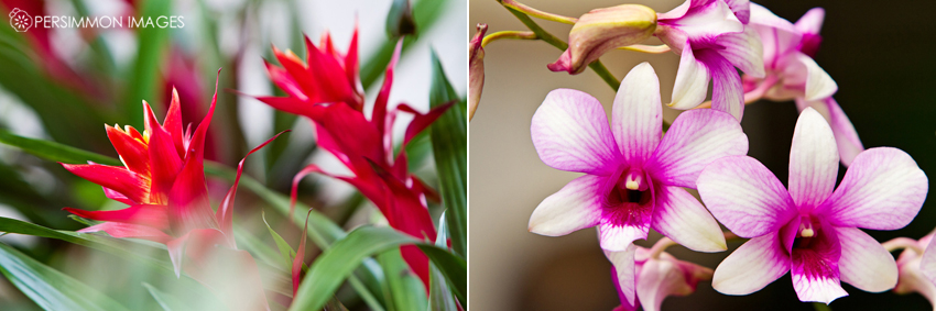 Hawaii flowers Bird of Paradise and Orchids