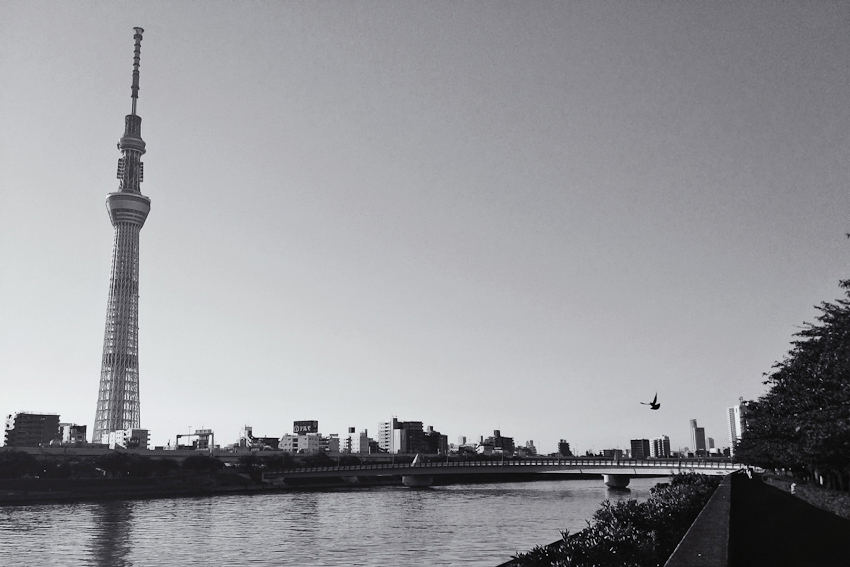 Tokyo Sky Tree over the Sumida river in Asakusa, morning