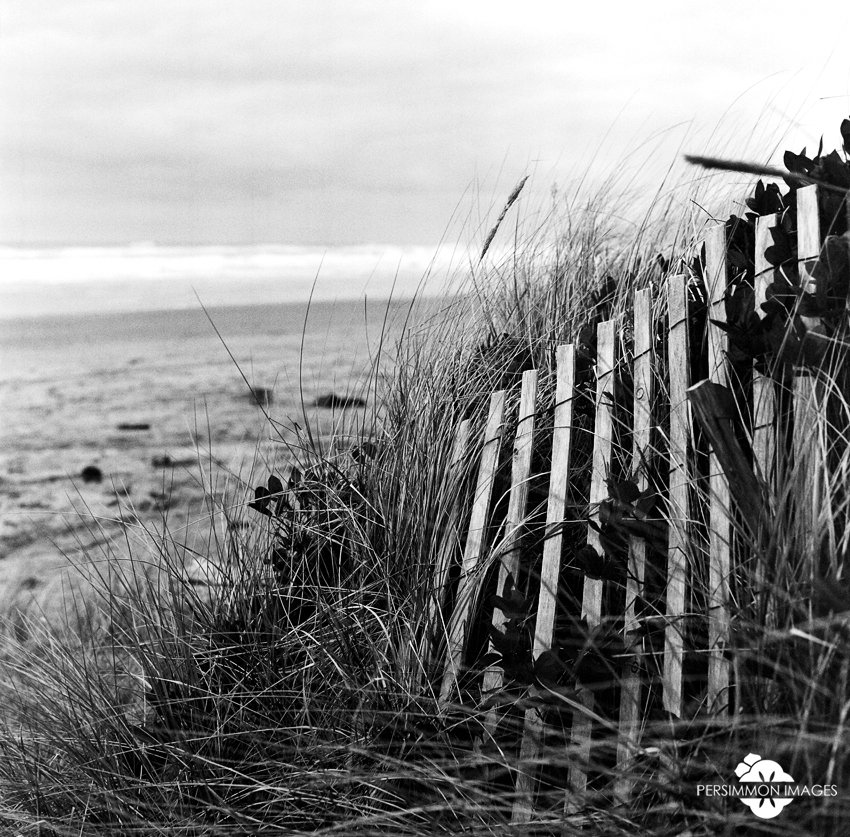 Fence and greenery by the Pacific Ocean. Rockaway Beach, OR. Hassleblad 500 C/M. 80mm. Kodak 400TX film.