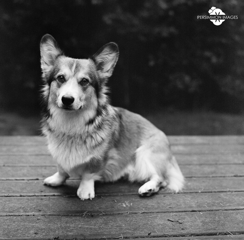 Corwin on our deck in Wallingford. Hassleblad 500 C/M. 80mm. Kodak 400TX film.