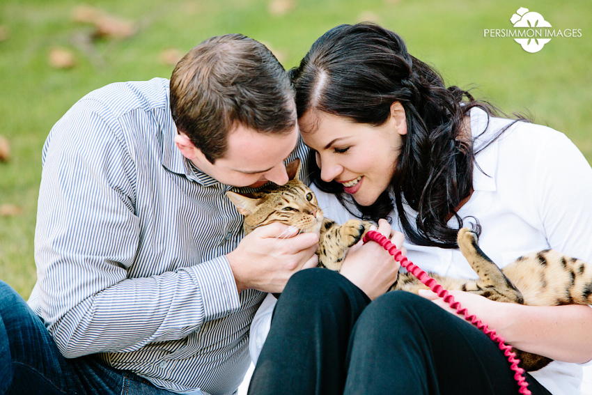 Savannah cat engagement photograph in Bellevue downtown park. Archer the Savannah cat with Cassie and Matt. Engagement photography by Seattle wedding photographer Persimmon Images
