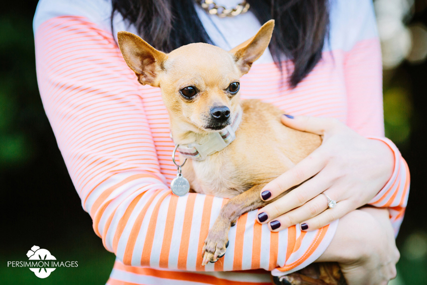 Chihuahua at Volunteer Park engagement photography session on Capitol Hill in Seattle